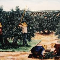 ACEITUNEROS (Miguel hernandez)