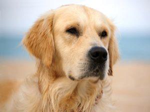 porque ladran los perros??