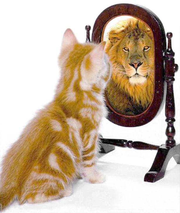 gato-leon-espejo